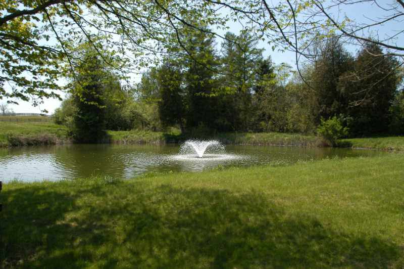 Stoked Pond, Fish, Fountain