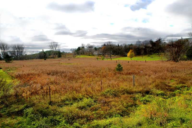 Caledon Village Building Lot, 1.7 Acres, Highway 10, For Sale, Mary Klein Listing Agent