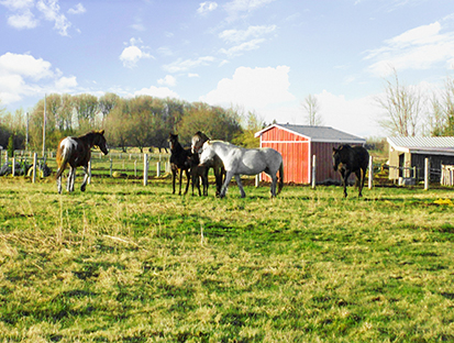 3+1 Bedroom Horse/Hobby Farm on 22 Acres
