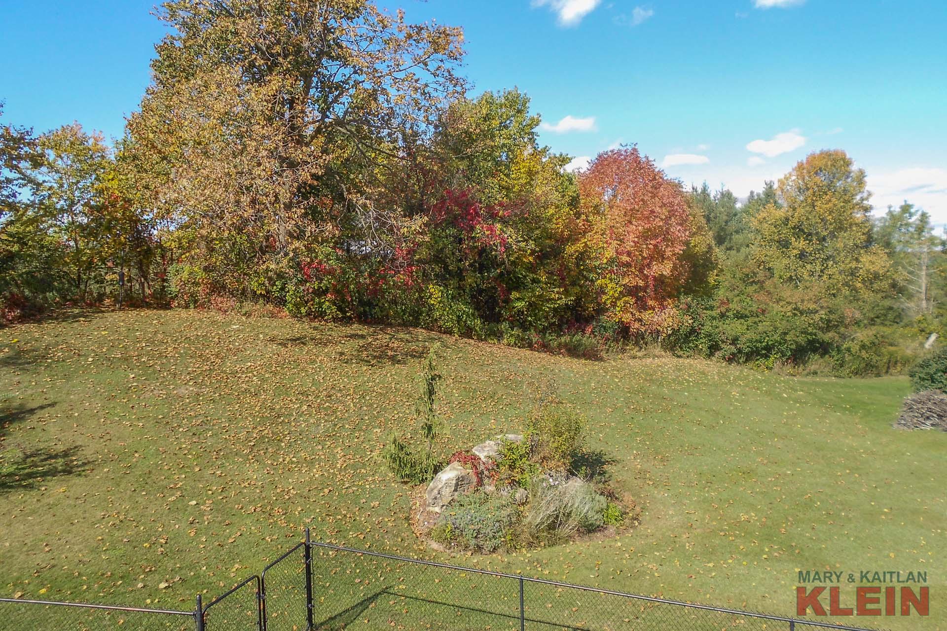 Views of the Backyard