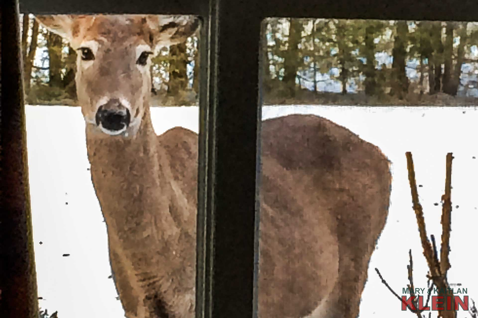 Curious Deer, Caledon, Nature