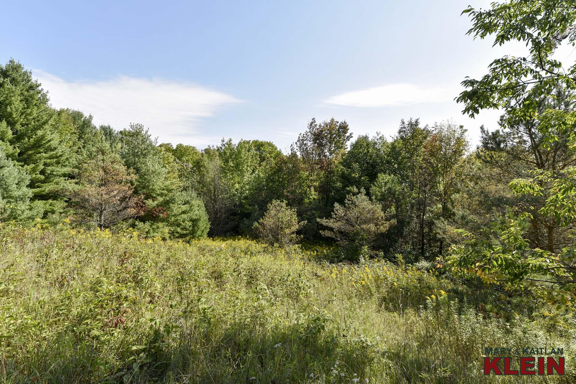 Mature trees and setting, Mulmur, ON
