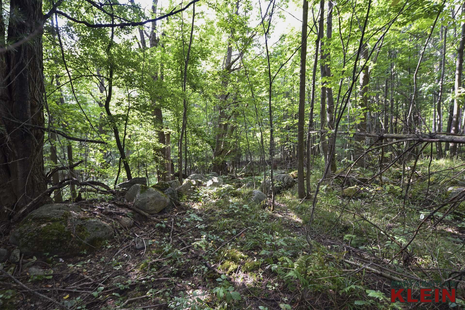 Mature Trees, trails, rocks